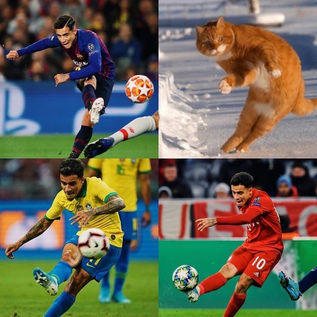 Собаки, корова и слон – появление животных на футбольном поле 12