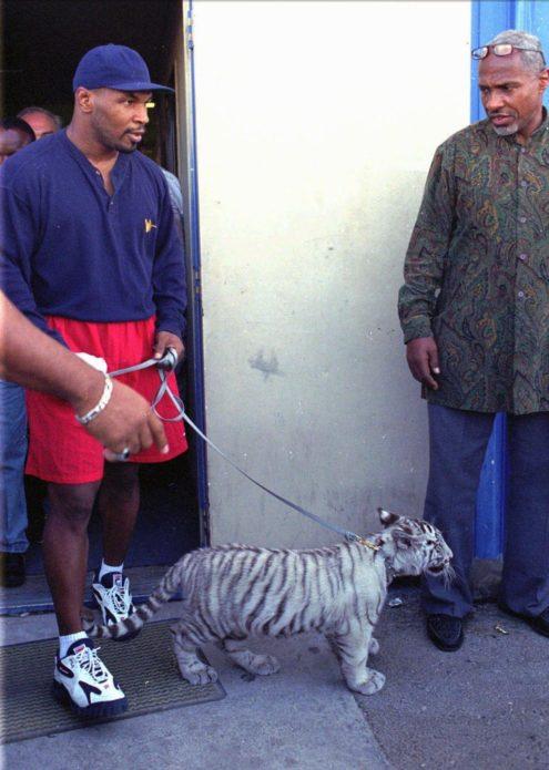 Майк Тайсон был настолько велик, что имел собственного тигра. Нет, такое было не только в фильме «Мальчишник в Вегасе»