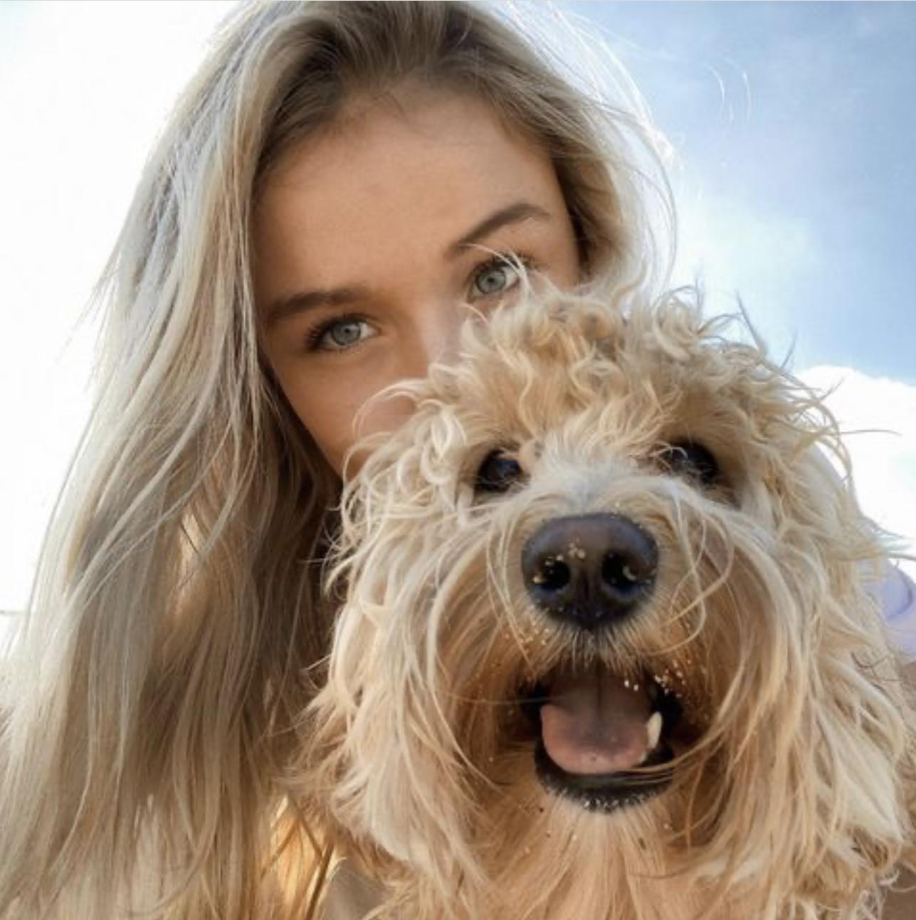 ВМеждународный день собак. Месси, Зинченко, Кавани, Хавертц и другие сдомашними любимцами
