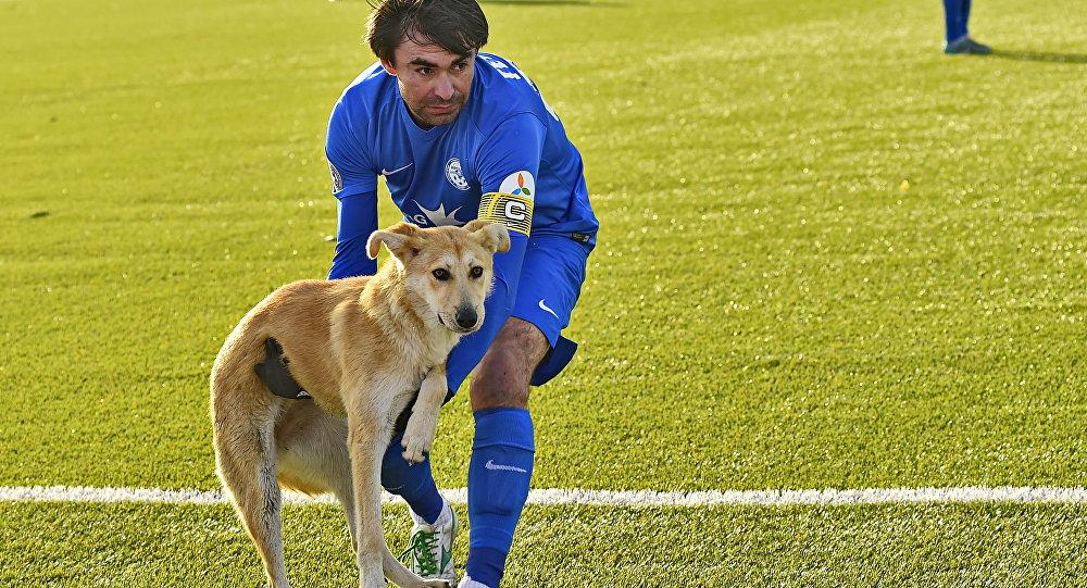 Собаки, корова и слон – появление животных на футбольном поле 2