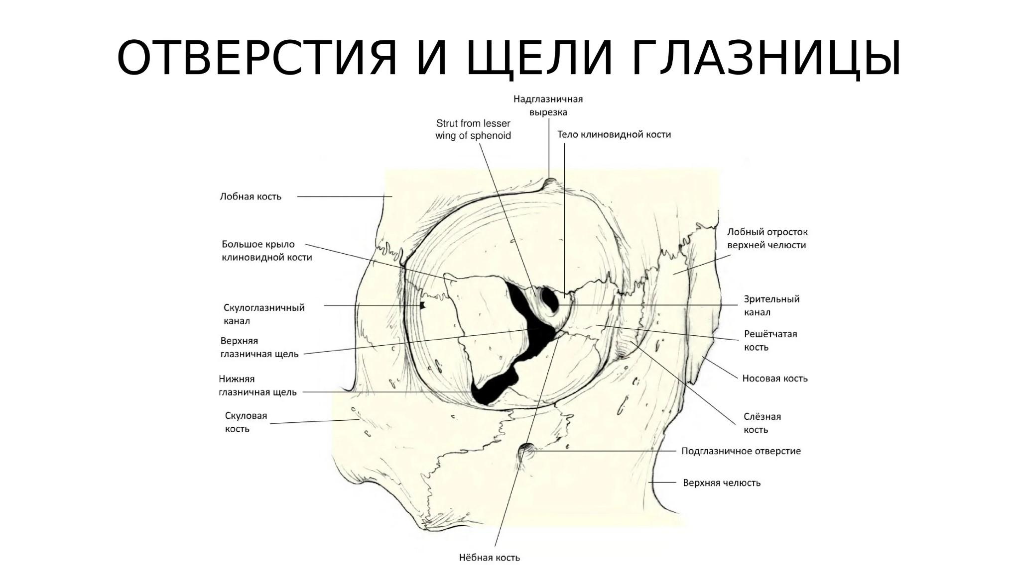 Изучаем травму Де Брюйне: перелом глазницы — это очень опасно, но шанс сыграть против России есть