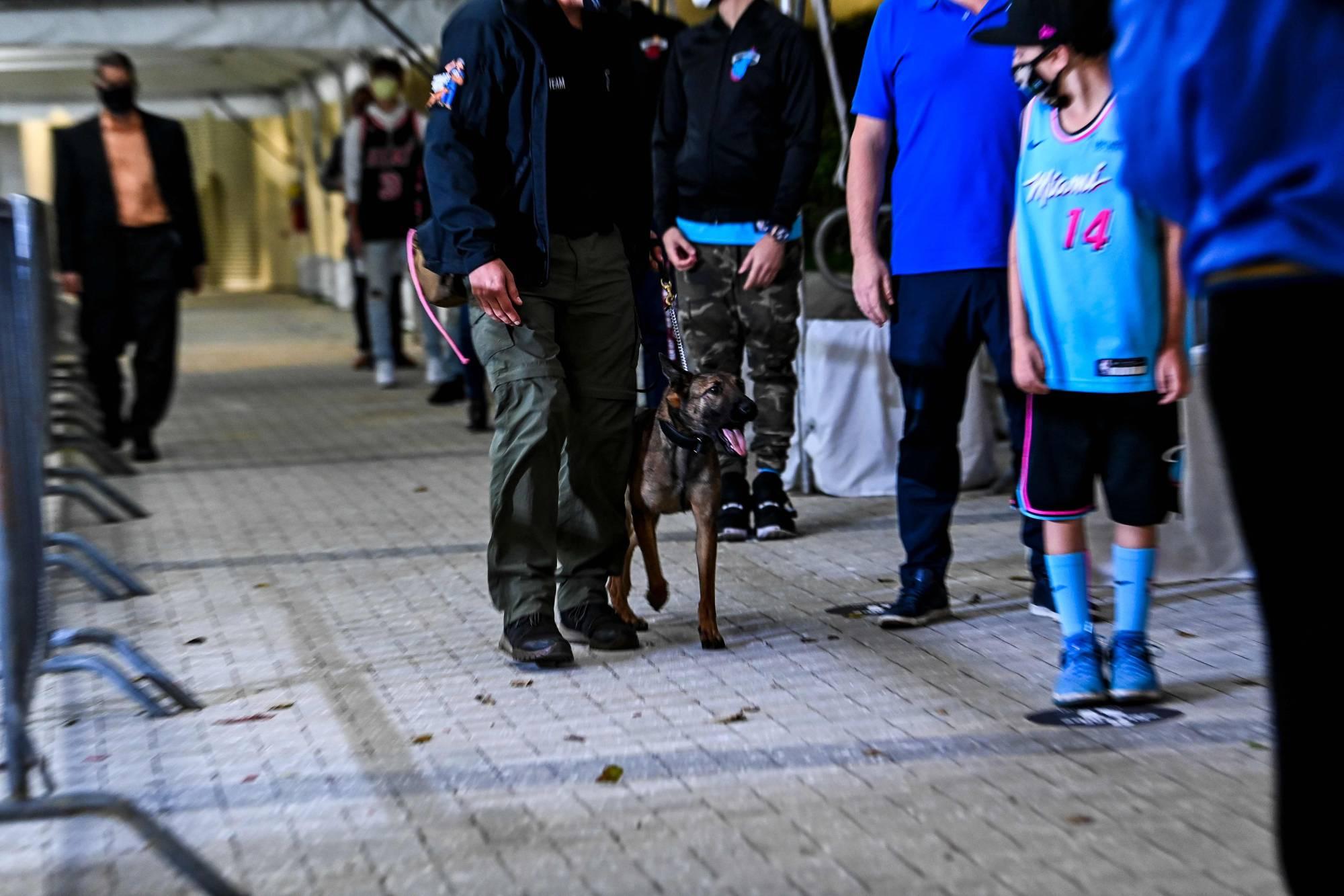 «Майами» нанял дрессированных собак, чтобы находить коронавирус у болельщиков. Это метод спасет индустрию