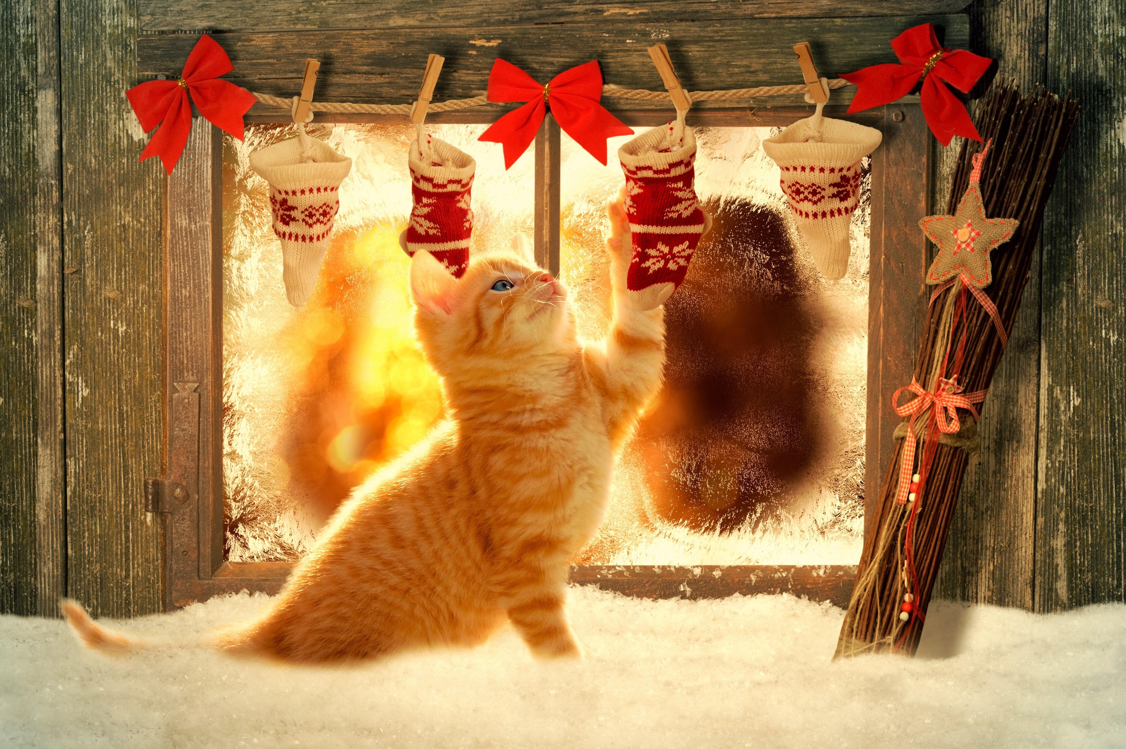 животные и спорт, ахахаха, Sports.ru, коты, почитать
