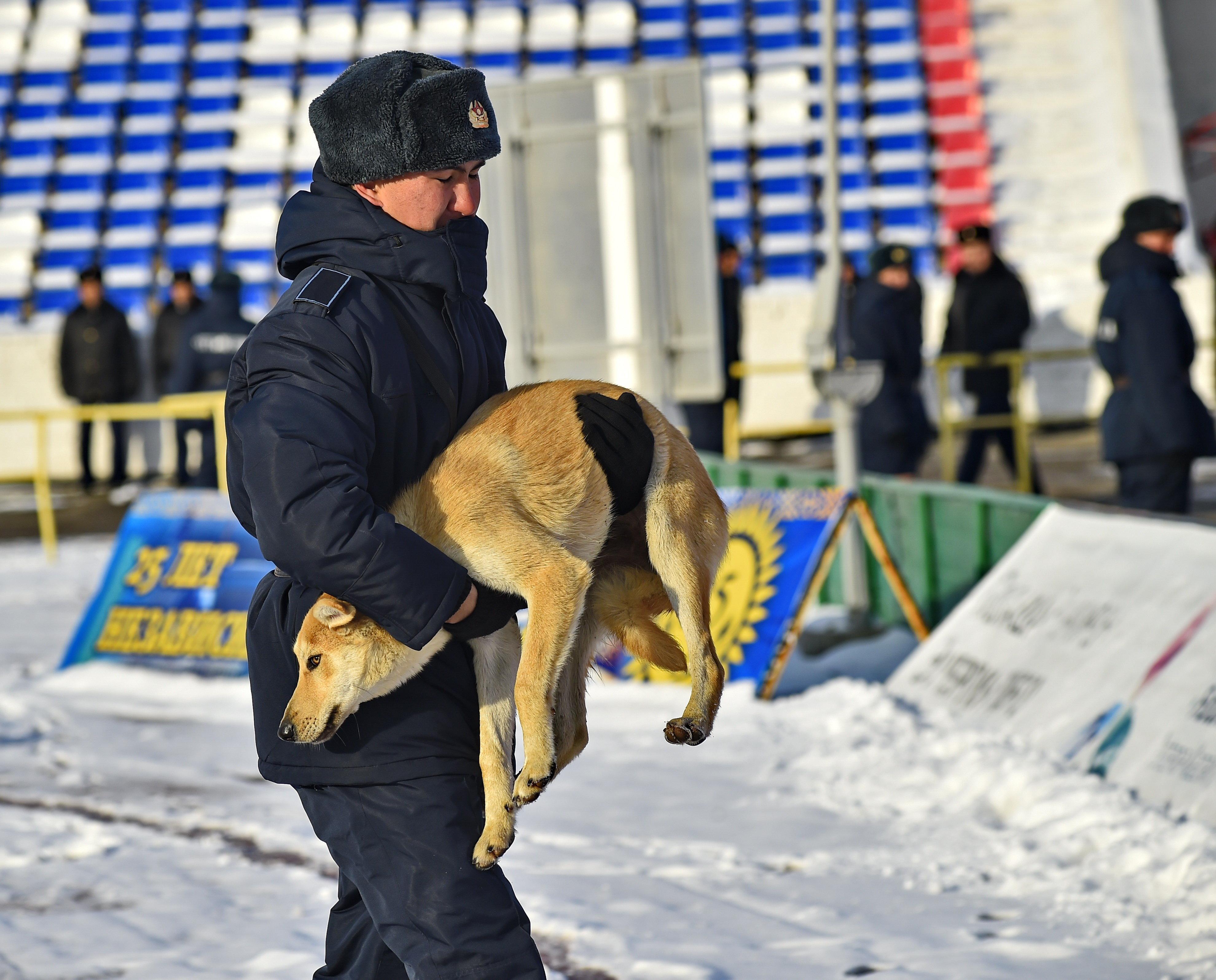 Собаки, корова и слон – появление животных на футбольном поле 3