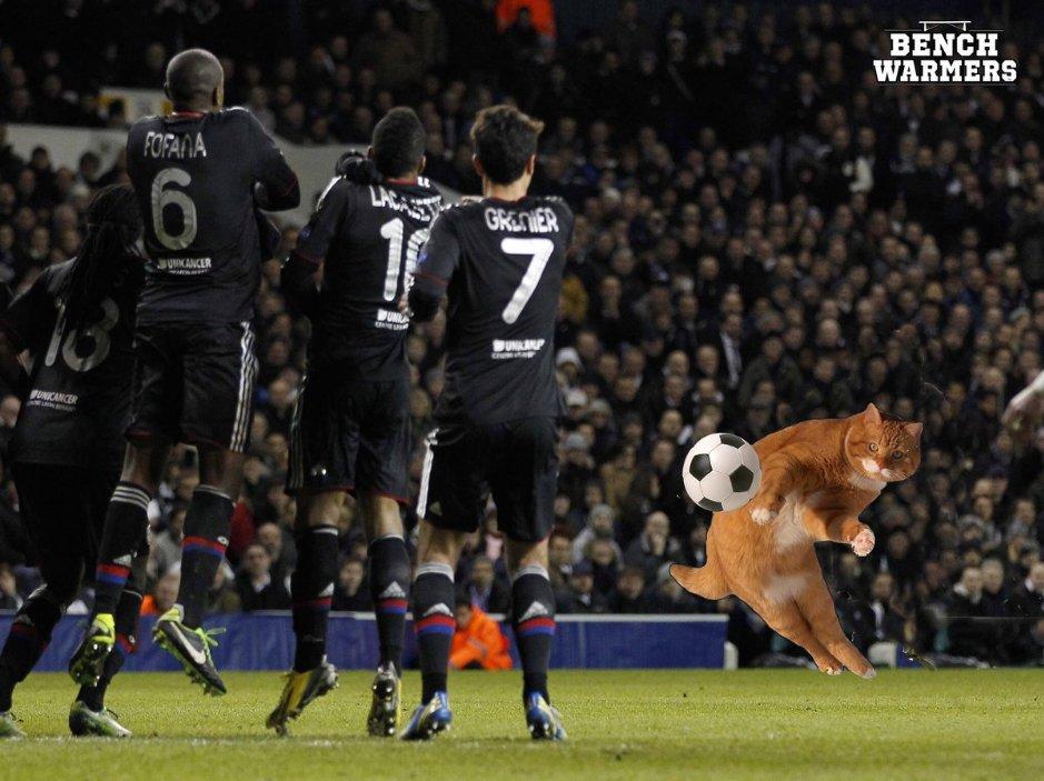 Собаки, корова и слон – появление животных на футбольном поле 11