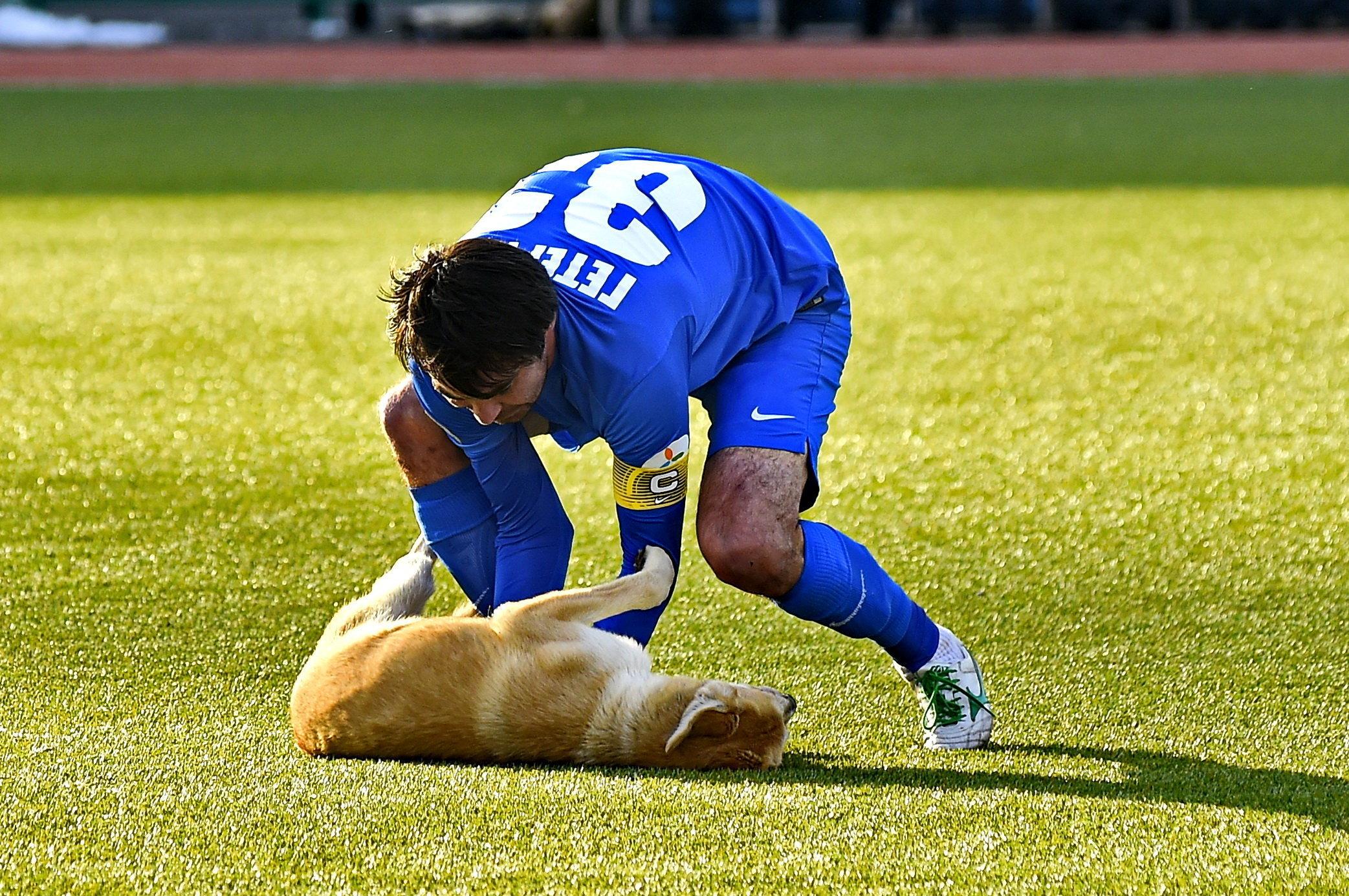 Собаки, корова и слон – появление животных на футбольном поле 1