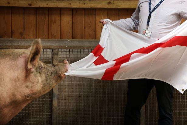 Слониха, черепаха и даже кот Губерниева — животные-предсказатели Евро-2020